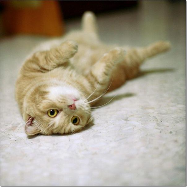 Gatinhos fofinhos (6)
