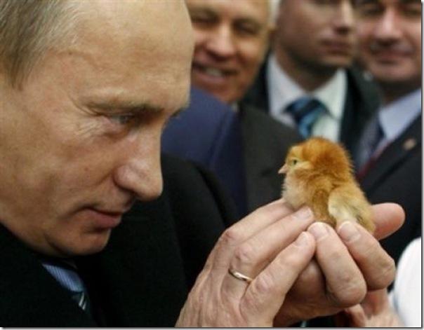 Vladimir Putin e o seu amor pelos animais (19)