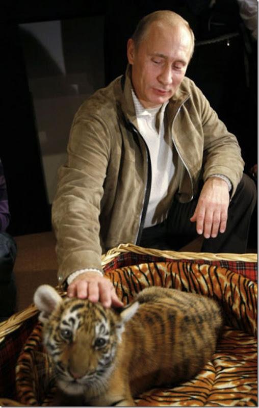 Vladimir Putin e o seu amor pelos animais (3)