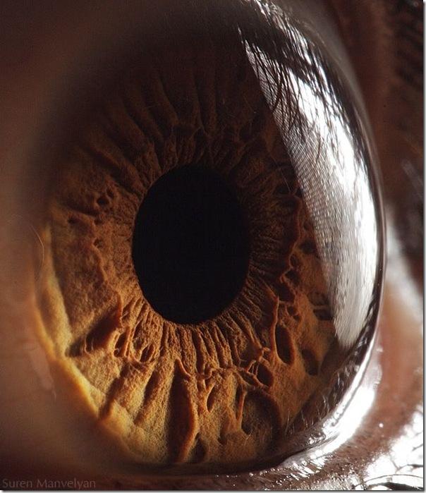 Fotos macro de olhos humanos (19)