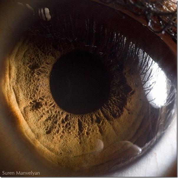 Fotos macro de olhos humanos (7)