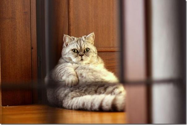 Giuly a gata gorda que ficou famoso na internet (11)
