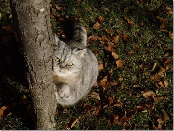 Giuly a gata gorda que ficou famoso na internet (5)
