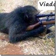 macaco-atirador