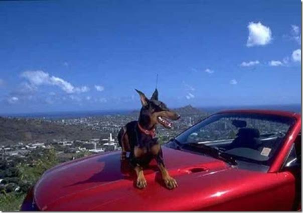 Sistema de segurança dos automóveis (2)