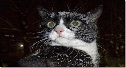 gato drogado