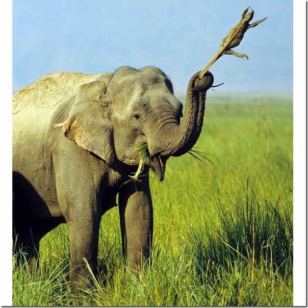 As melhores fotos de animais de 2010 (13)