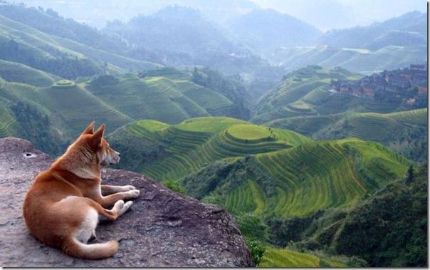 Olhando a paisagem