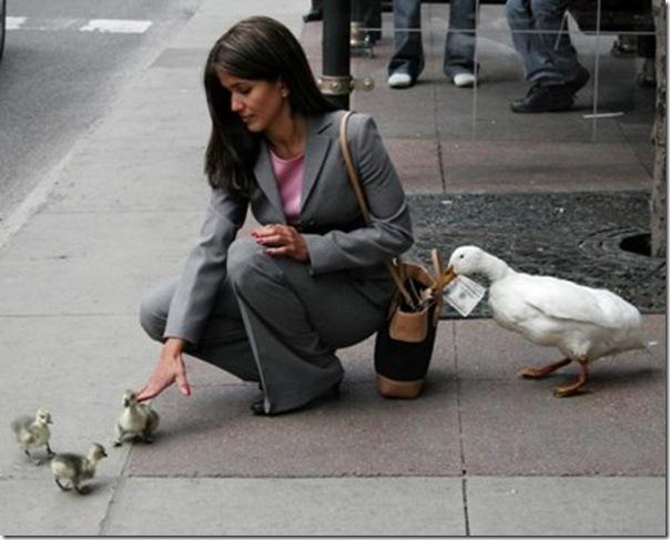 O pato ladrão