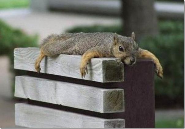 Esquilo relaxando