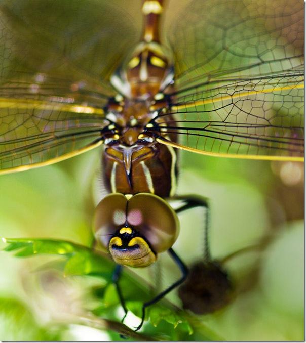 O Pequeno mundo da natureza por Louise Docker (3)