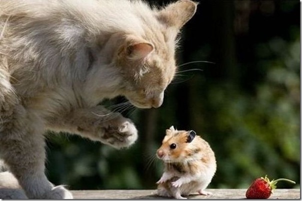 Gato e rato frente a frente (2)