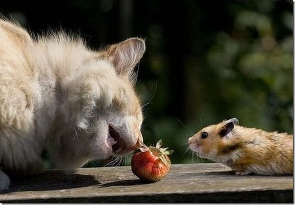 Gato e rato frente a frente (3)