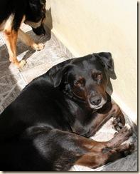2009-08-02_romany dingo_2796 sm