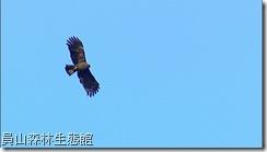 Oriental Waltz by Alan HSU