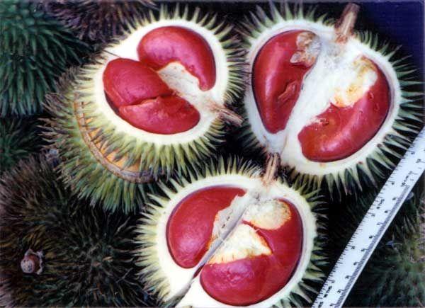 รูปภาพ ทุเรียนเนื้อสีเลือด ของจริงจากเกาะบอเนียว