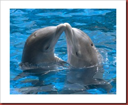 12152485A~Dolphin-kiss-Posters