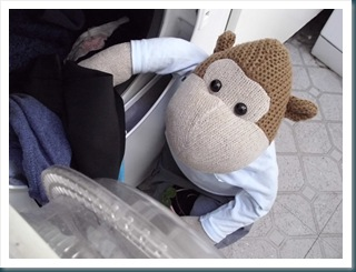 Monkey Loading the Tumble Dryer 2