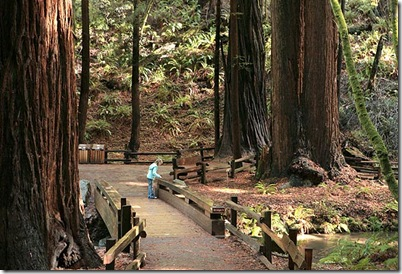 Muir Woods girl
