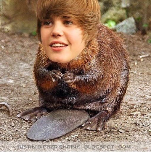 justin bieber There really is a Justin Beaver ahaha