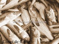 Pescado-Caducado