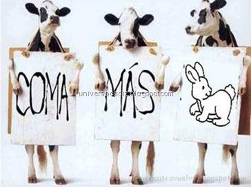 coma_mas_conejo