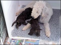 Pups_May_2010_024