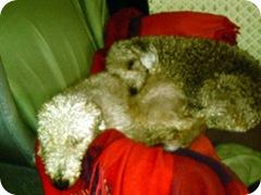 lucy ben_still_share_1_14-04-2009_16-21-44