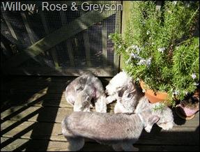 Greyson,_Rose,_Amelia
