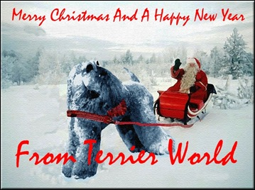 TerrierWorld_Christmas_Card
