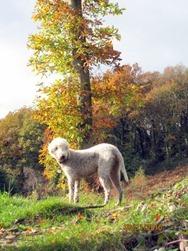 Autumn woods 084