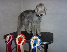 Cleveland Show 6mth