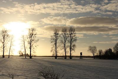 Poranne drzewa i ostre słońce