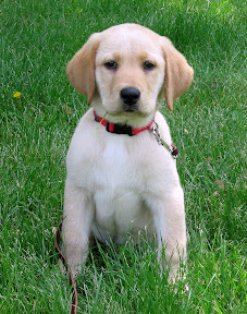 Watson Puppy Sitting