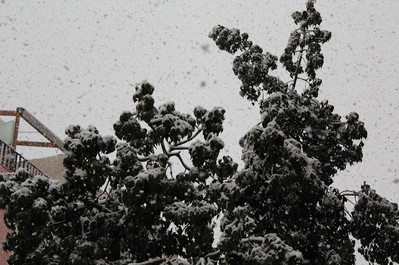 Detall de la neu sobre els arbres II