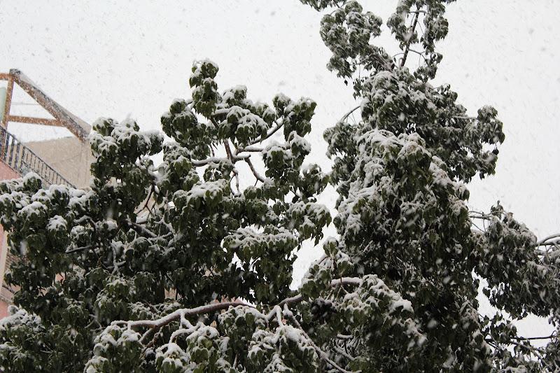 Detall de la neu sobre els arbres