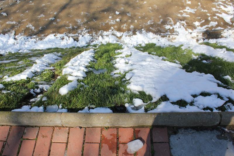 El dia després de la nevada: Parc Europa II