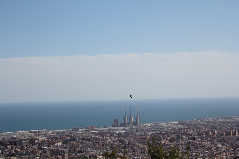 Vol d'oreneta sobre Barcelona II