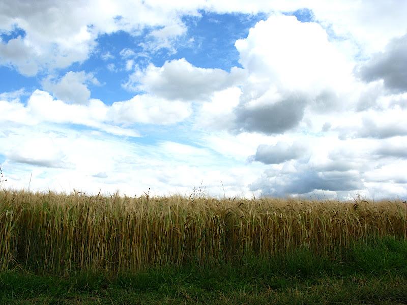 Fields of gold (II)