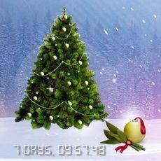 Snow Christmas Tree 02