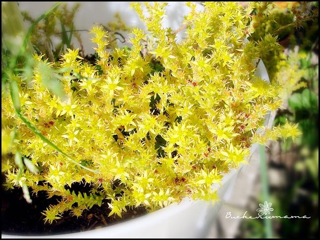 yellow-plant