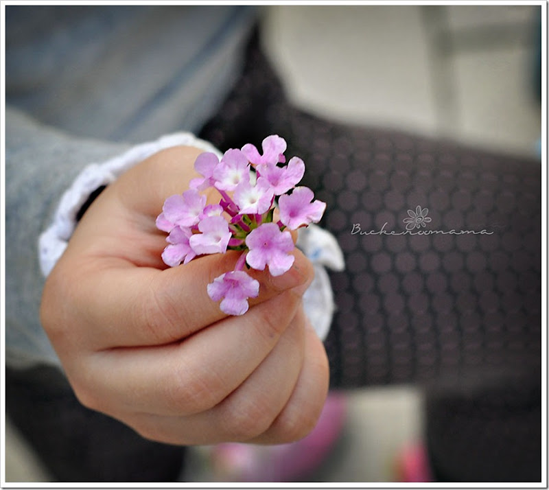 Little-flowers