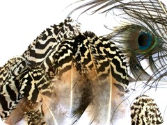 Peacock-Feathers-10
