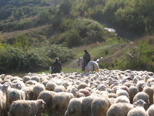 Shepherding on Horseback, Molise