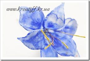 синий Цветок1