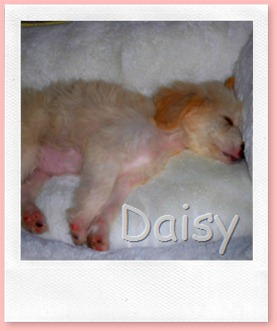 Maddie and Daisy 034