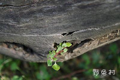 [台南-楠西] 2010 梅嶺-登山篇