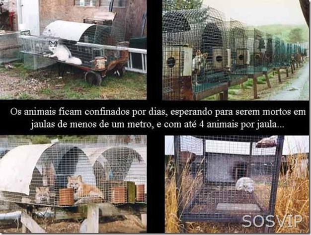 Maus tratos animais (4)
