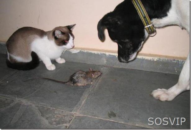 Gato, Rato e Cachorro