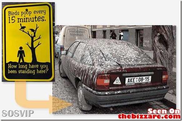 Placas Desmotivacionais - avisos engraçados.jpg (4)